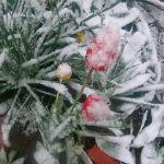 Video ! Ninge și la Hâncești pe 20 Aprilie.