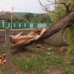 Video! Un copac a căzut peste o casă din comuna Onești din Raionul Hâncești