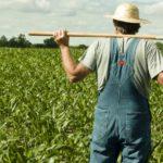 999.md a anunțat sprijin pentru fermierii locali