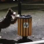Un câine filmat cum strânge gunoiul și îl aruncă în urne